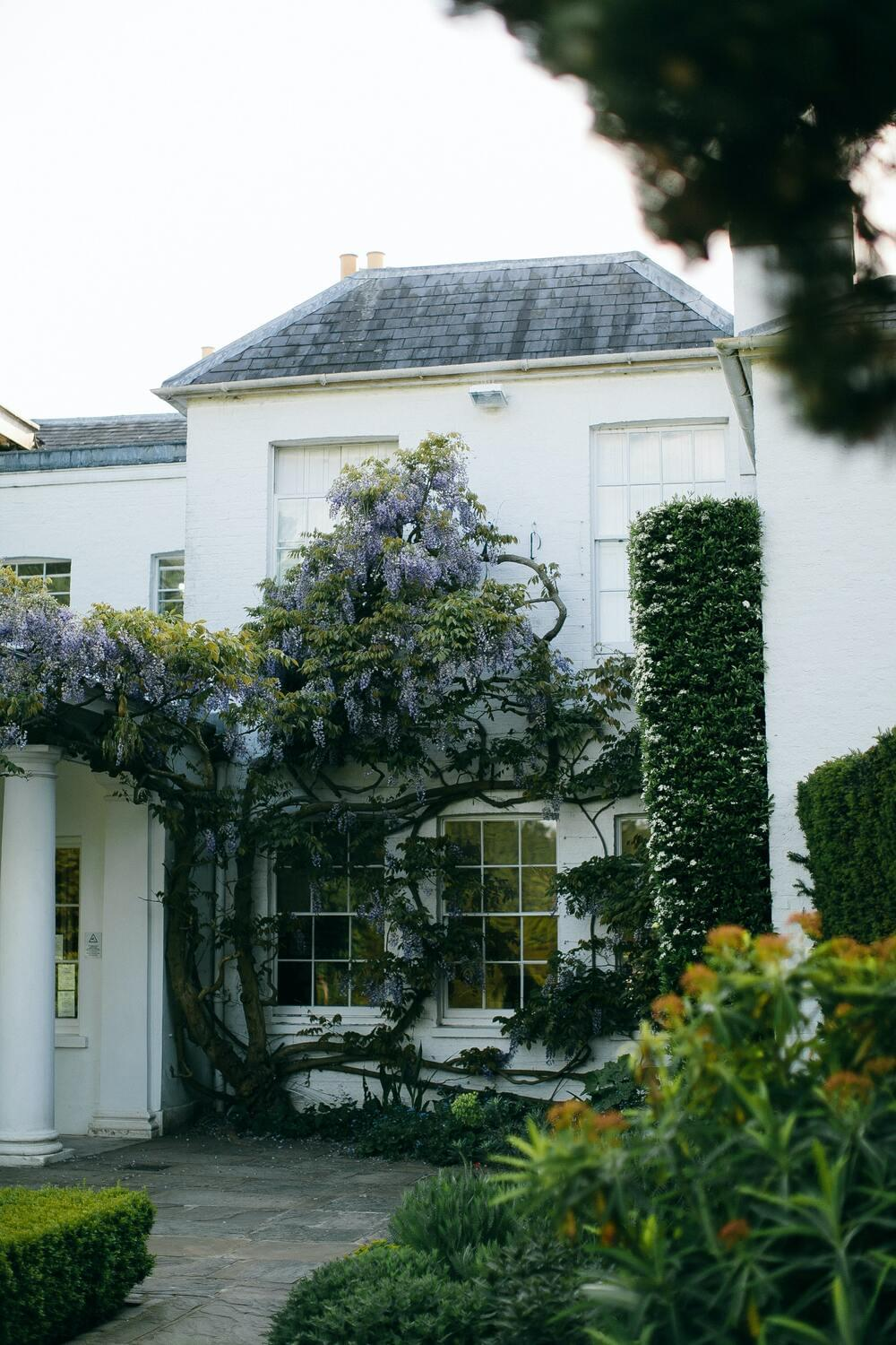 House with plants