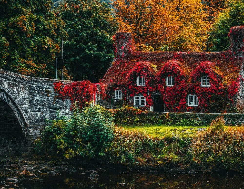 Photo of a house covered in red foliage